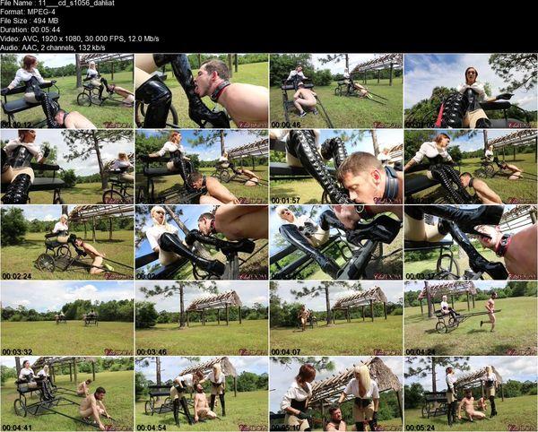Clubdom - Dahila Rain, Harlow Pony Cart